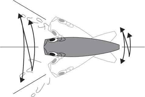 Sashimi-3D-Popper-Action.jpg